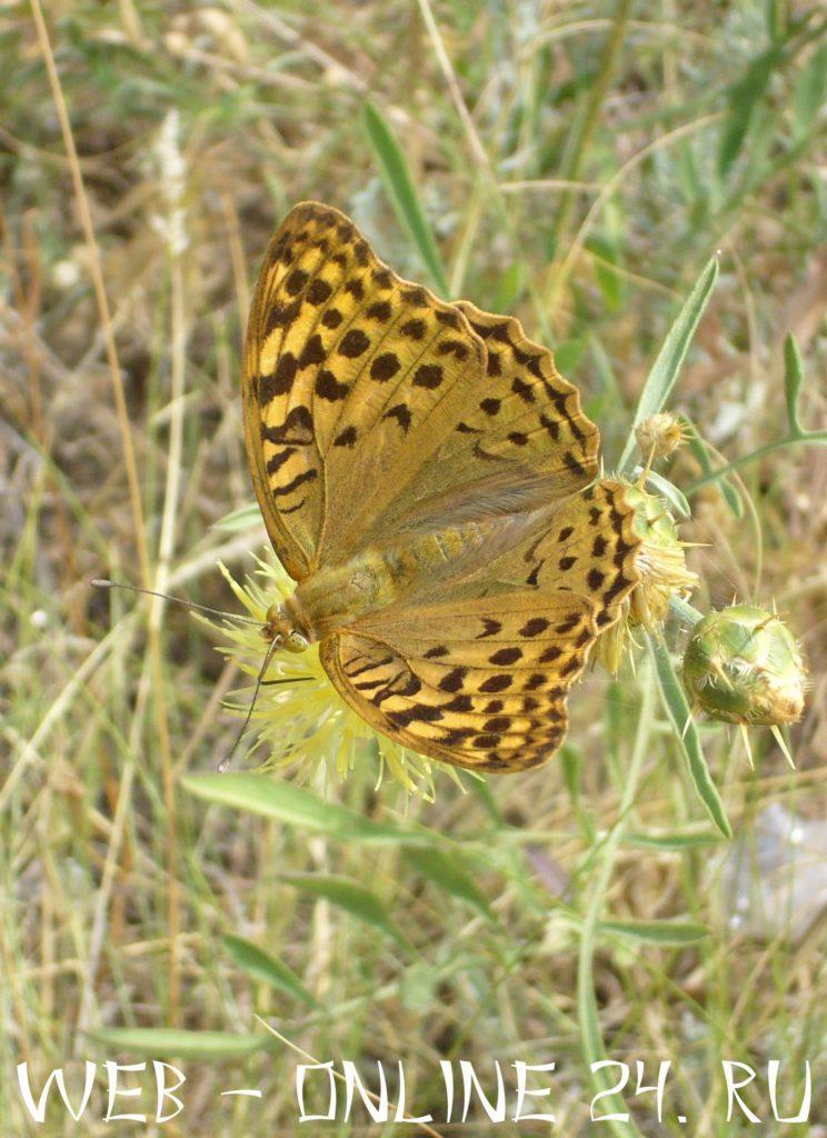 Бабочка в заказнике Новый Свет