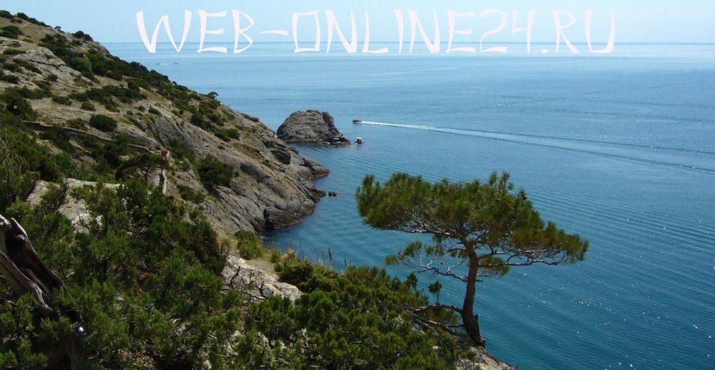 Сосны на морском берегу в Крыму